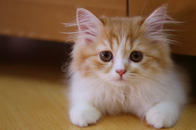 De pot van het kattenhuisdier royalty-vrije stock afbeeldingen
