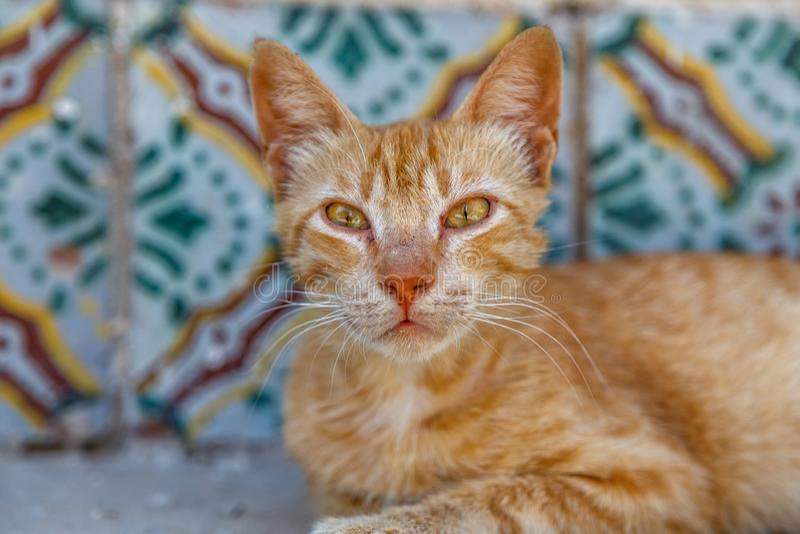 De pot van Nice op de straat van Sousse-medina wordt gevonden die royalty-vrije stock foto's
