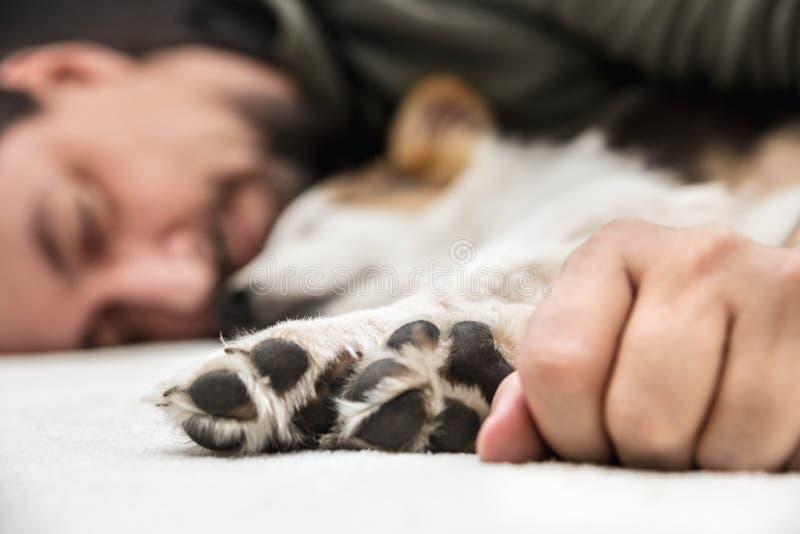 De poten van een puppyhond en maledienen voorzijde, mensen en jong het ontspannen in royalty-vrije stock afbeelding