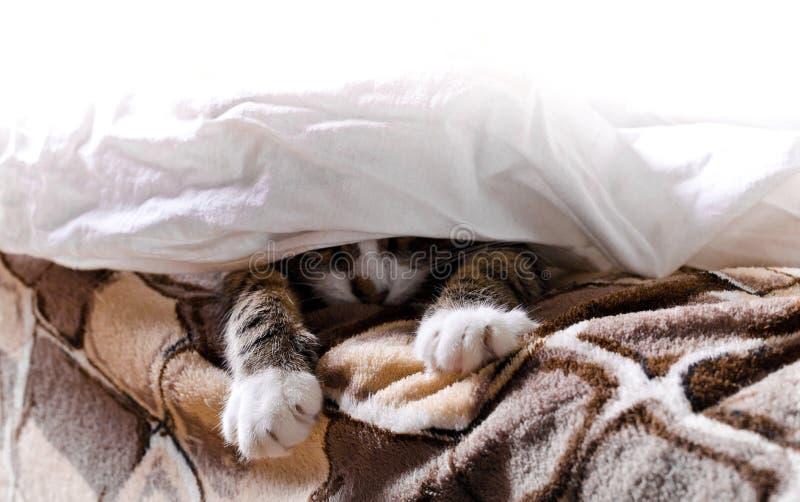 De poten van de kat kijken uit van onder de deken stock afbeelding