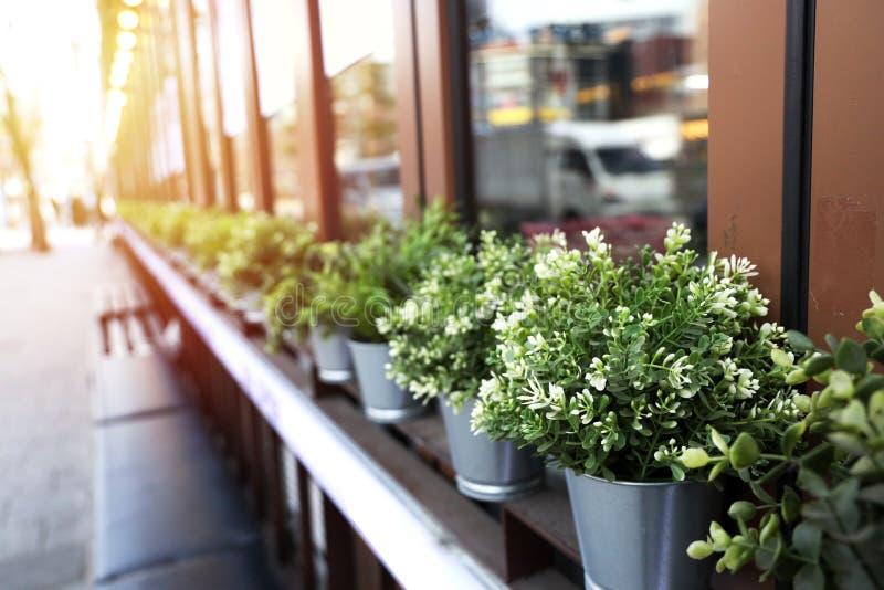De potten van de zinkinstallatie met groene bomen die in het venster van het rijenglas worden geschikt stock foto's