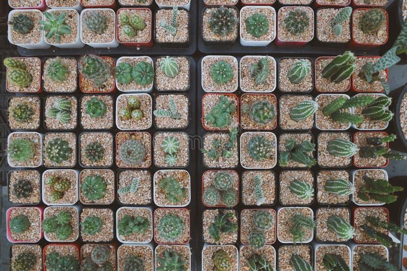 De potten in vierkante vorm, zetten vele cactusinstallaties in potten royalty-vrije stock afbeelding