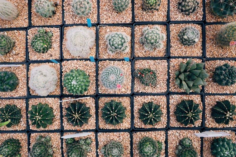 De potten in vierkante vorm, zetten vele cactusinstallaties in potten stock afbeeldingen