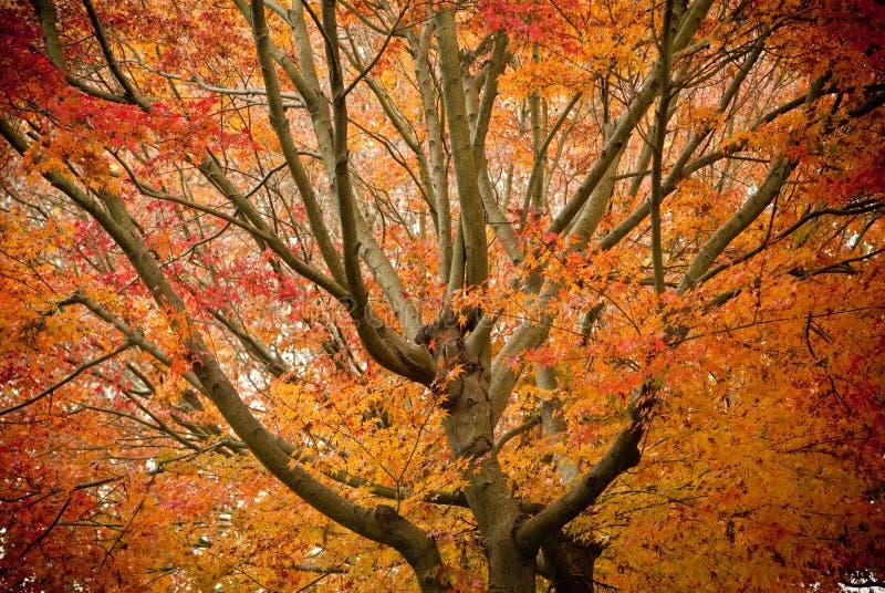 De pracht van de herfst stock foto's