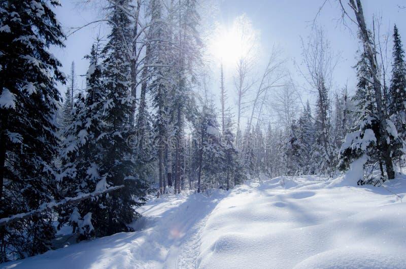 De prachtige winter royalty-vrije stock foto