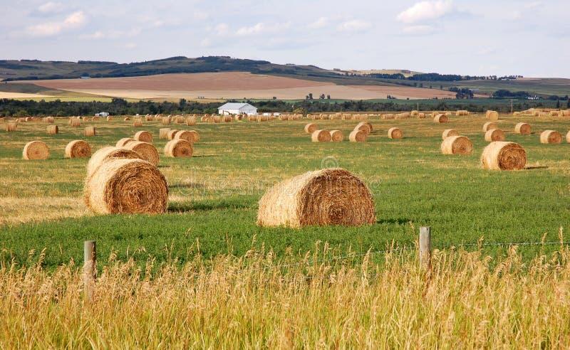De prairie en het strostapels van de herfst stock fotografie