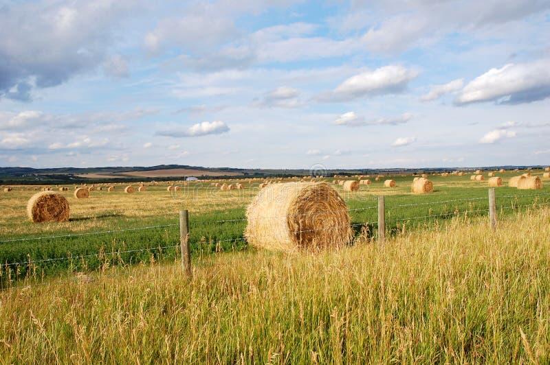 De prairie en het strostapels van de herfst royalty-vrije stock afbeelding