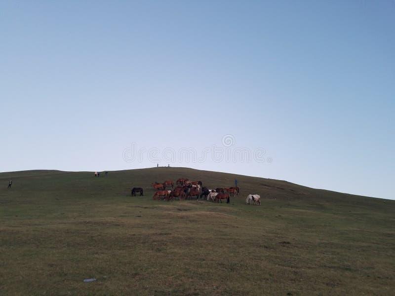 De Prairie van Hulunbuir royalty-vrije stock afbeeldingen