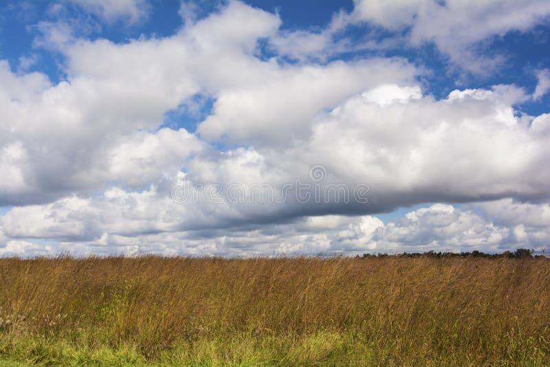 De Prairie van Ohio stock foto's