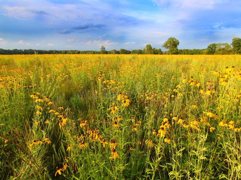 De Prairiebloemen van Illinois in Bloei stock foto