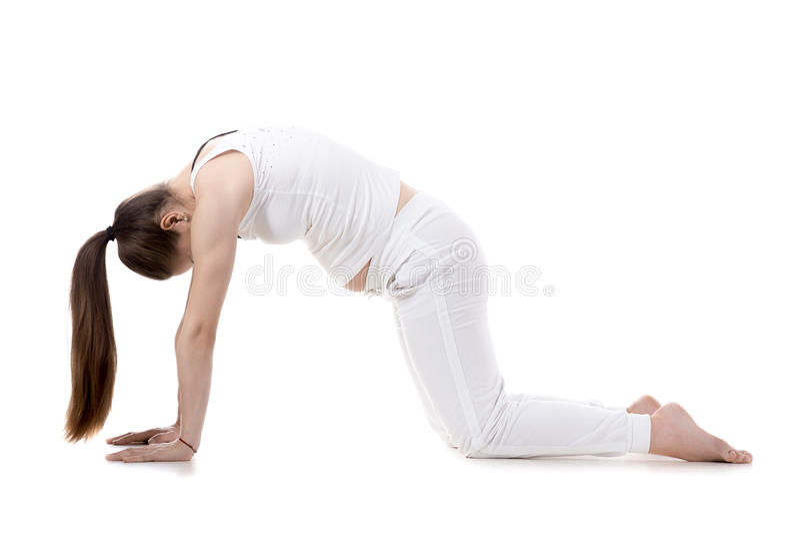 De prenatale Yoga, Kat stelt royalty-vrije stock foto's