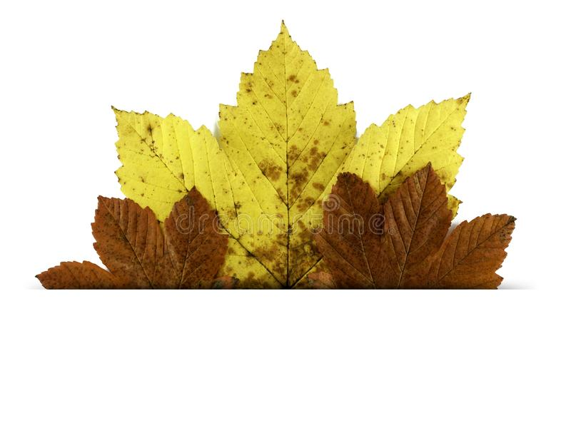 De prentbriefkaar met de herfst doorbladert geïsoleerd in wit royalty-vrije stock foto