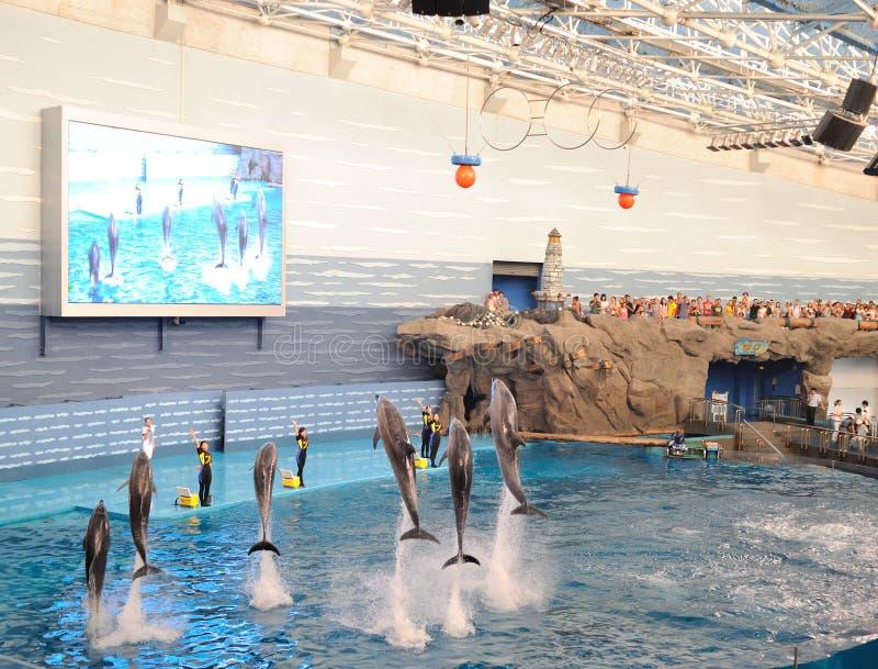 De prestaties van de dolfijn stock afbeeldingen