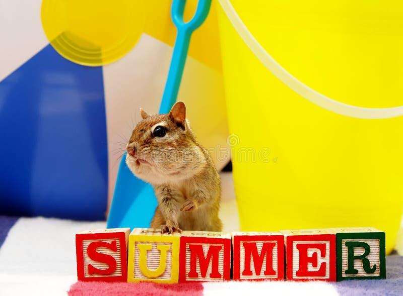 De pretaardeekhoorn van de zomer stock afbeelding