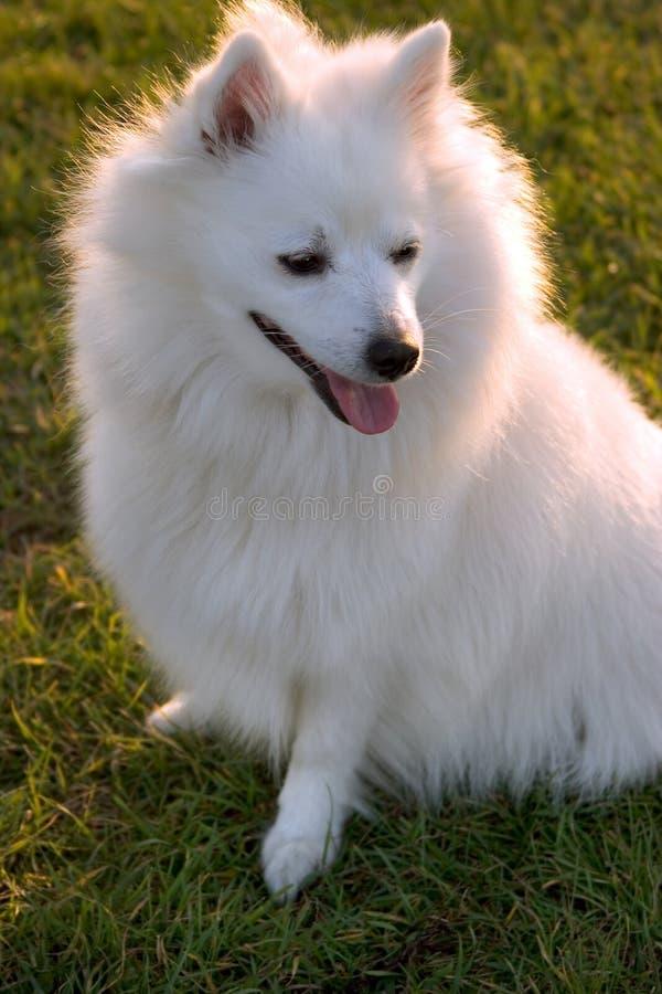 Download De prinses van de hond stock afbeelding. Afbeelding bestaande uit dier - 284783