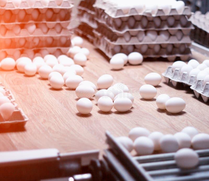 De productie van kippeneieren, gevogelte, kippeneieren gaat door de transportband voor het verdere sorteren, close-up, vervoerder stock foto