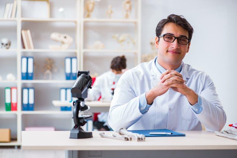 De professor die menselijk skelet in laboratorium bestuderen stock afbeeldingen