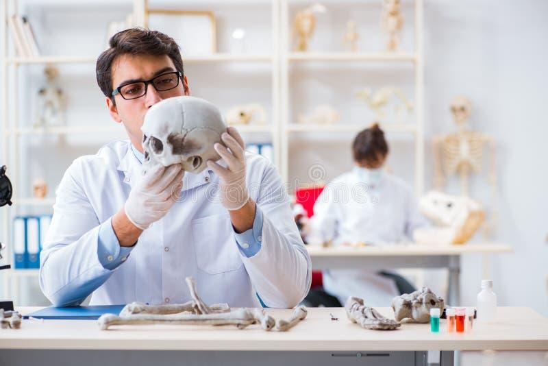 De professor die menselijk skelet in laboratorium bestuderen stock fotografie