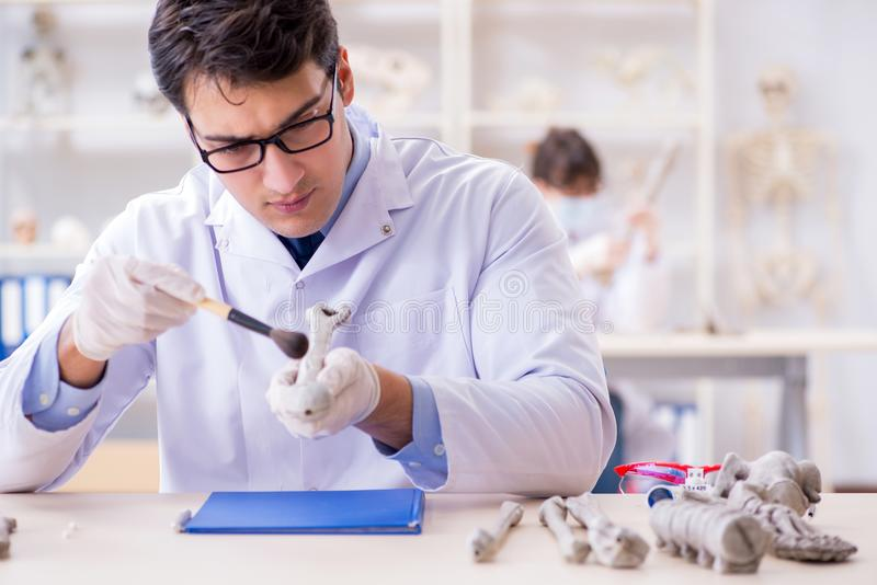 De professor die menselijk skelet in laboratorium bestuderen royalty-vrije stock afbeelding