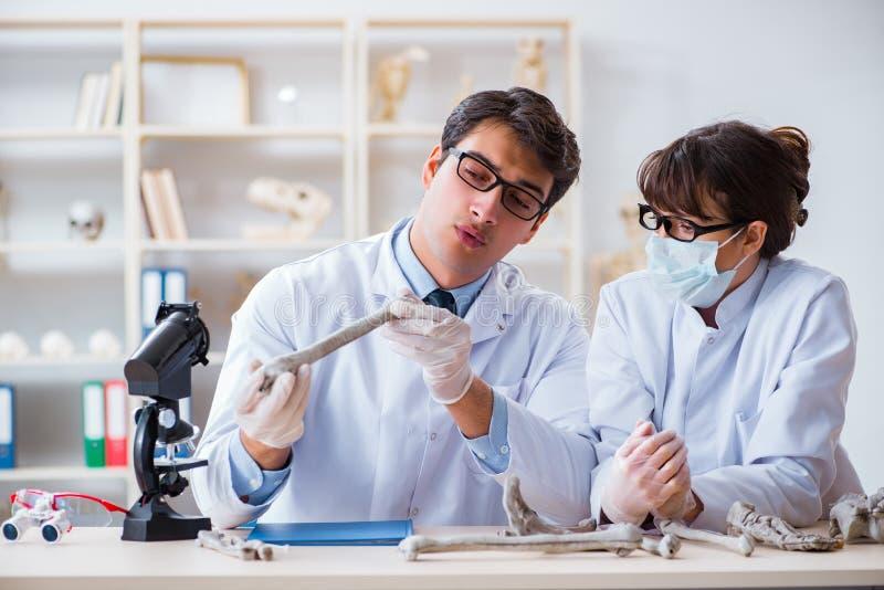 De professor die menselijk skelet in laboratorium bestuderen royalty-vrije stock foto's