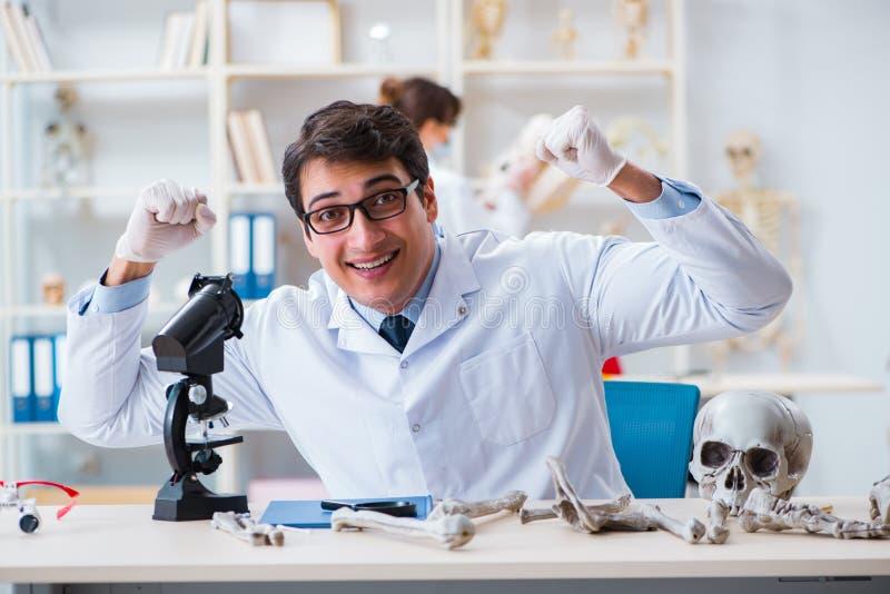 De professor die menselijk skelet in laboratorium bestuderen stock afbeelding
