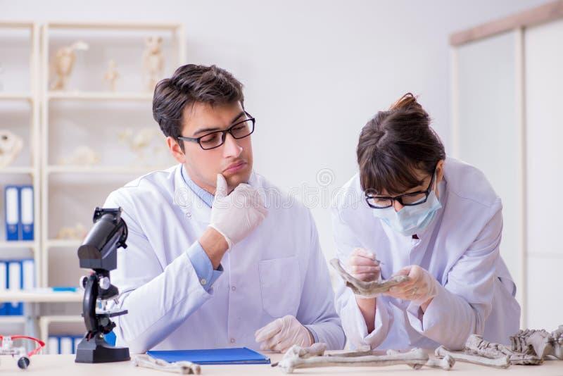 De professor die menselijk skelet in laboratorium bestuderen stock foto's