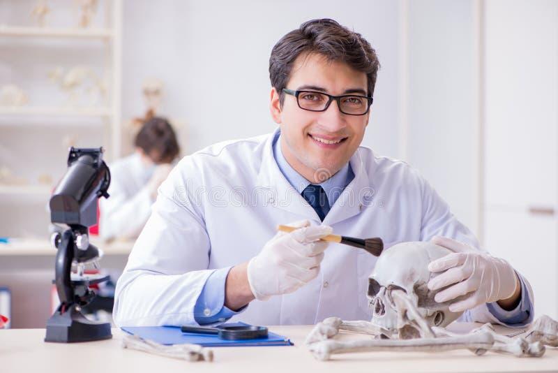 De professor die menselijk skelet in laboratorium bestuderen royalty-vrije stock foto