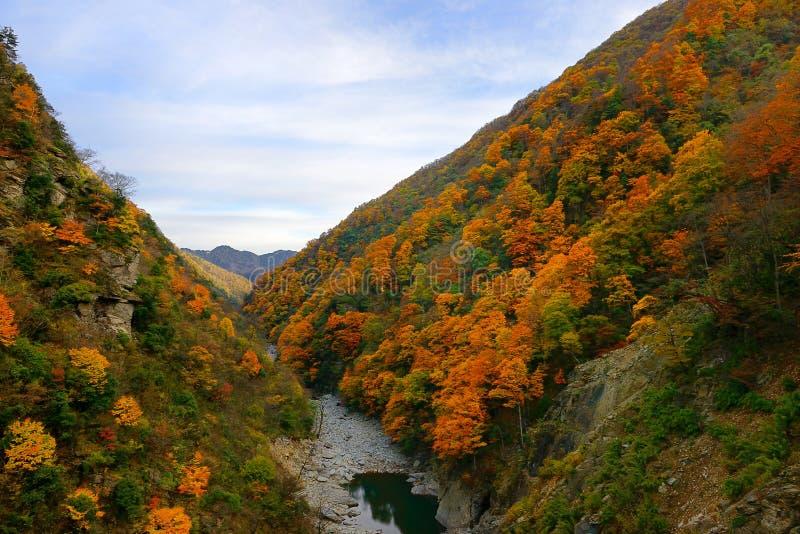 De Provincie van China Hubei, Shennongjia-landschap stock afbeelding