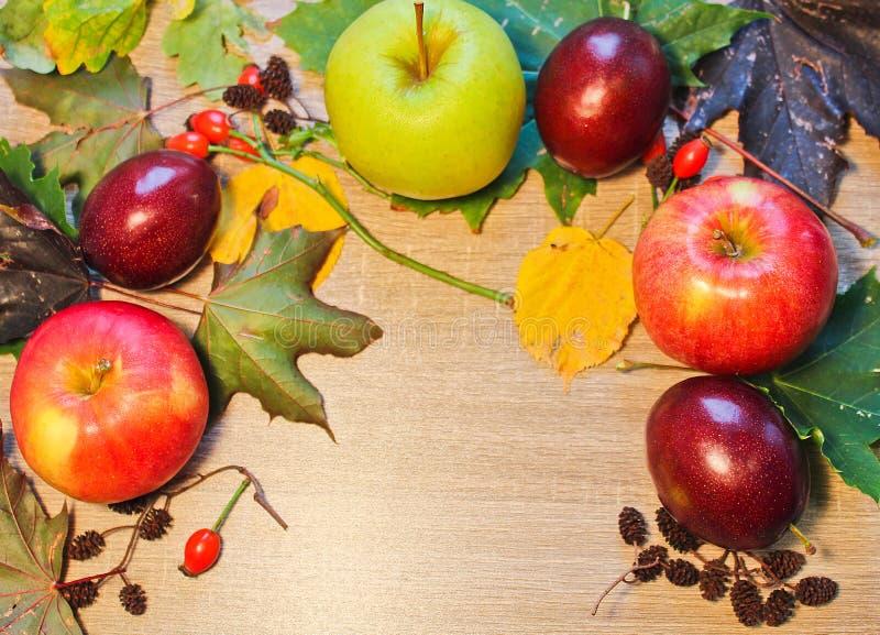 De pruim, de appel, het katje, meer brier en de steen van het de herfststilleven op houten royalty-vrije stock foto's