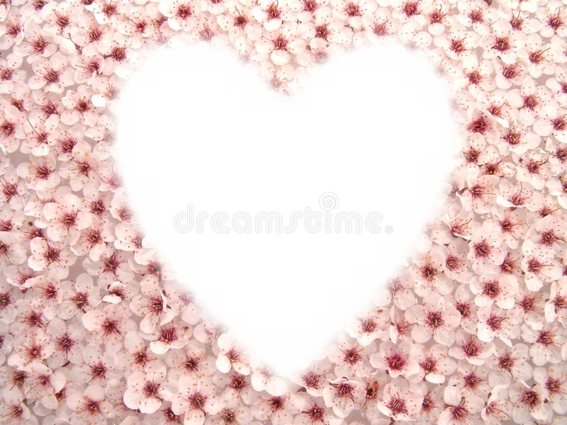 De pruim bloeit Hart I stock foto