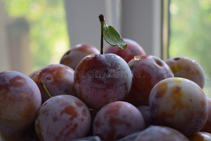 De prune d'été toujours pourpre savoureux de boîte à fruit de photo de la vie images libres de droits