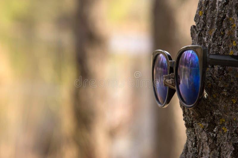 De punten op de boom, de boom ziet ook voor tekst royalty-vrije stock afbeelding