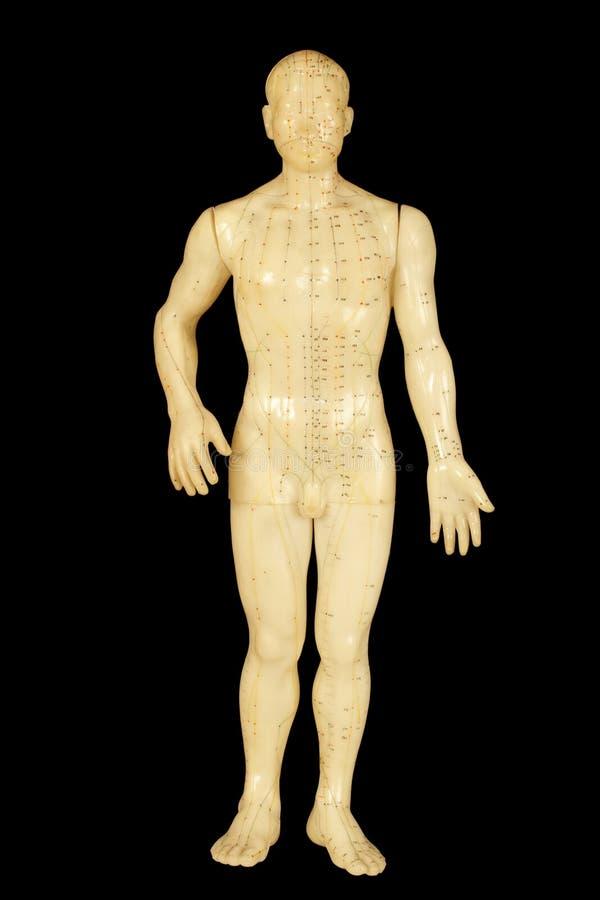 De punten van de acupunctuur royalty-vrije stock foto's