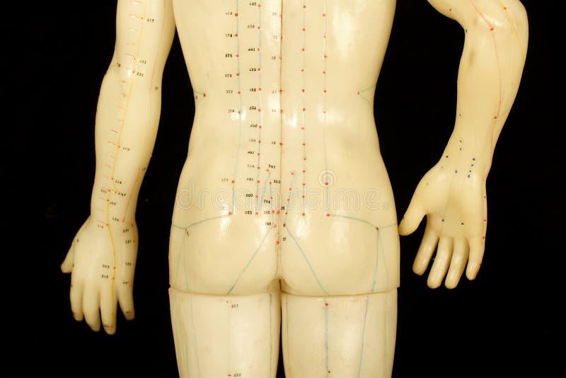 De punten van de acupunctuur royalty-vrije stock afbeelding