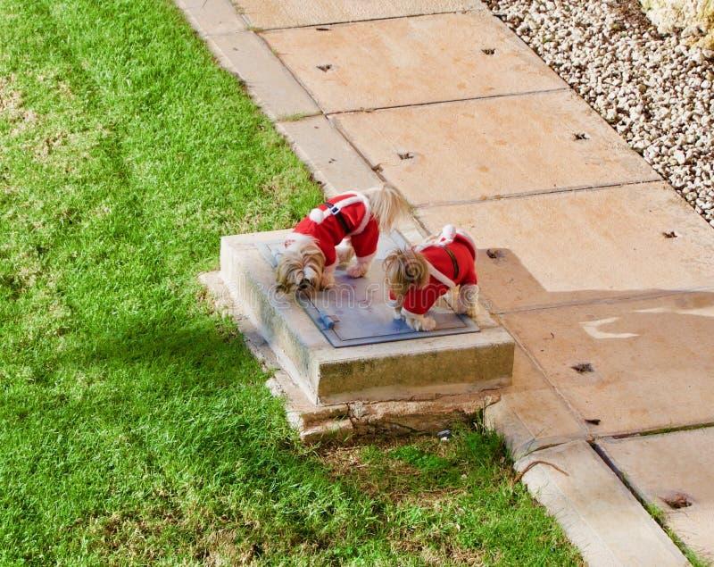 De puppy kleedden zich als Kerstman wandelend in de tuin stock foto's