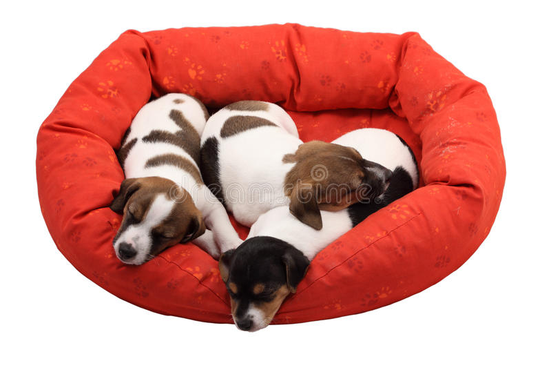 De puppy van de slaap stock afbeeldingen