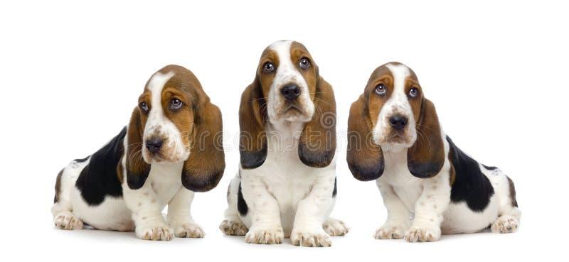 De Puppy van de stilte royalty-vrije stock fotografie