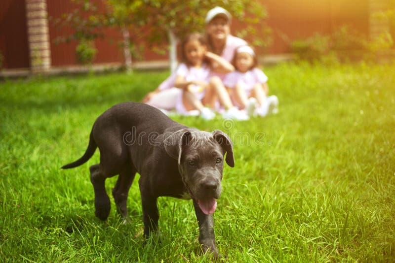 De puppyhond en defocused familie met kinderen in de zomer in de groene tuin stock afbeeldingen
