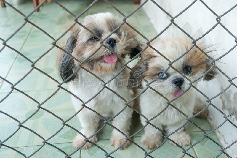 De puppyhond in kooi en heeft slecht zicht stock afbeeldingen