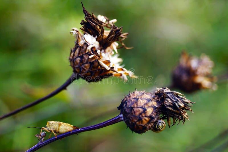 De purpere bloem van de prikleydistel op natuurlijke groene achtergrond stock afbeelding
