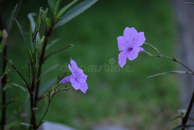 De purpere bloemen royalty-vrije stock afbeelding