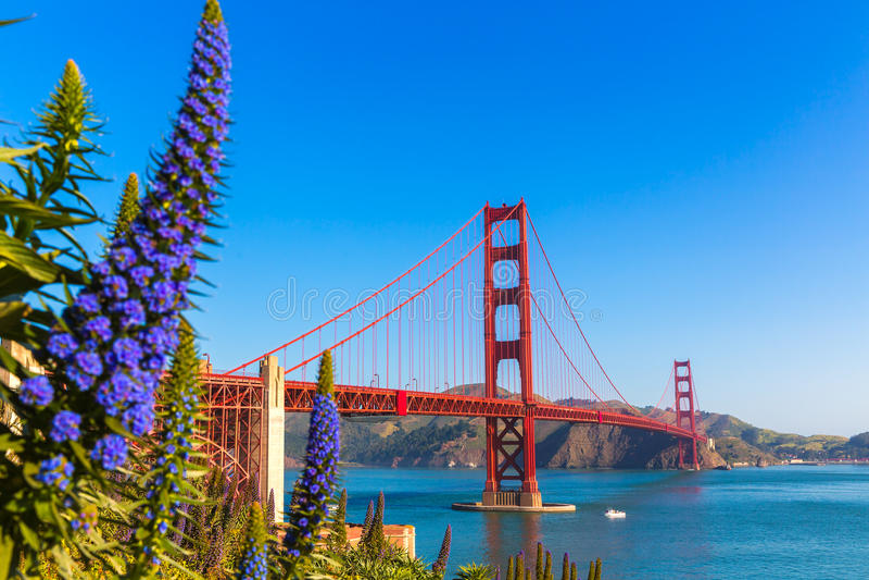 De purpere bloemen Californië van golden gate bridge San Francisco royalty-vrije stock afbeeldingen