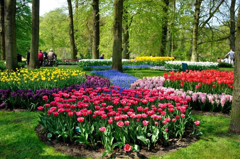 De purpere, gele, blauwe, roze en witte tulpen in Keukenhof parkeren in Holland stock fotografie