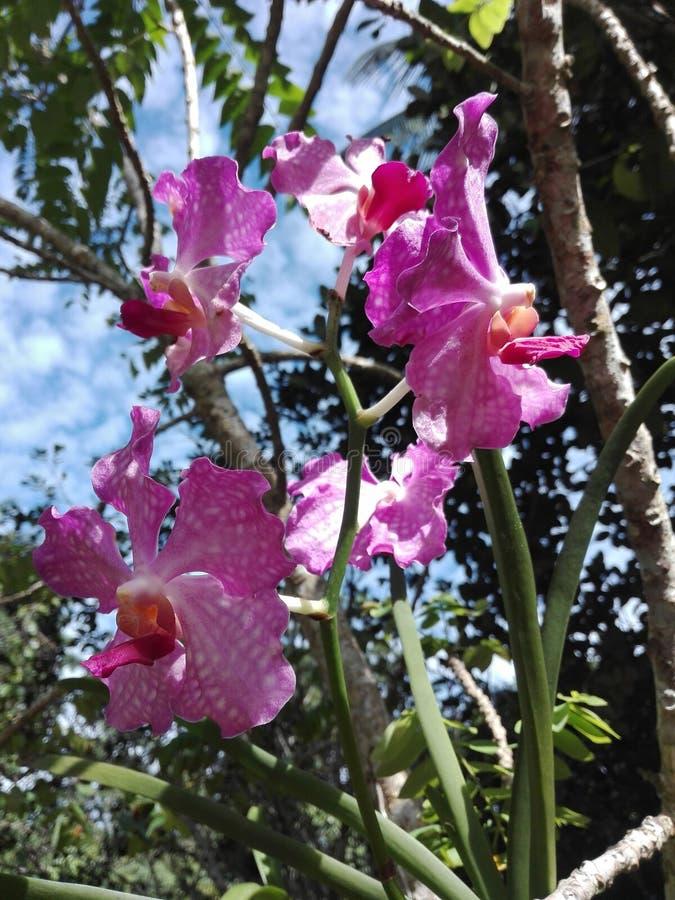 De purpere orchidee?n zijn zeer mooi royalty-vrije stock foto