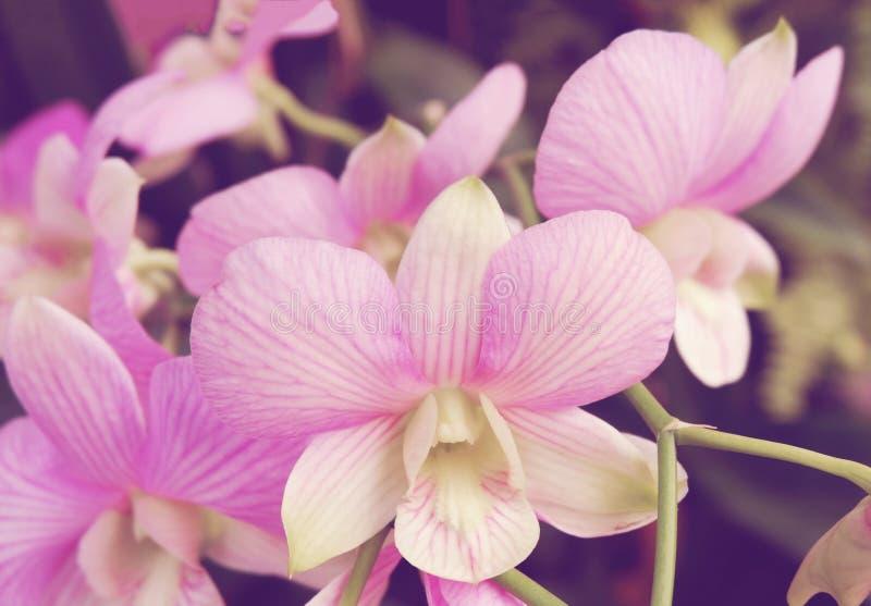 De purpere Orchidee van Bloemen royalty-vrije stock foto