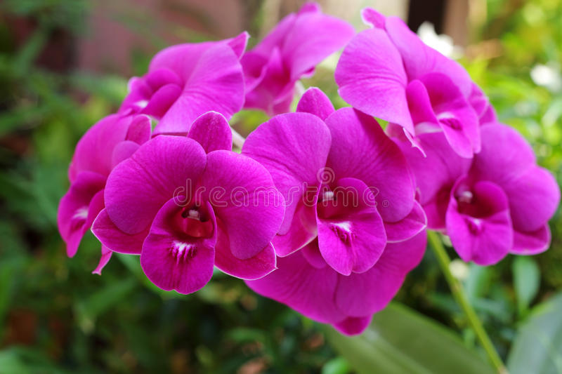 Purpere orchidee. stock foto