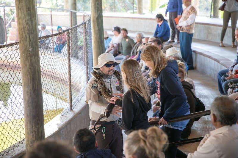De python toont in Everglades Safari Park stock foto's