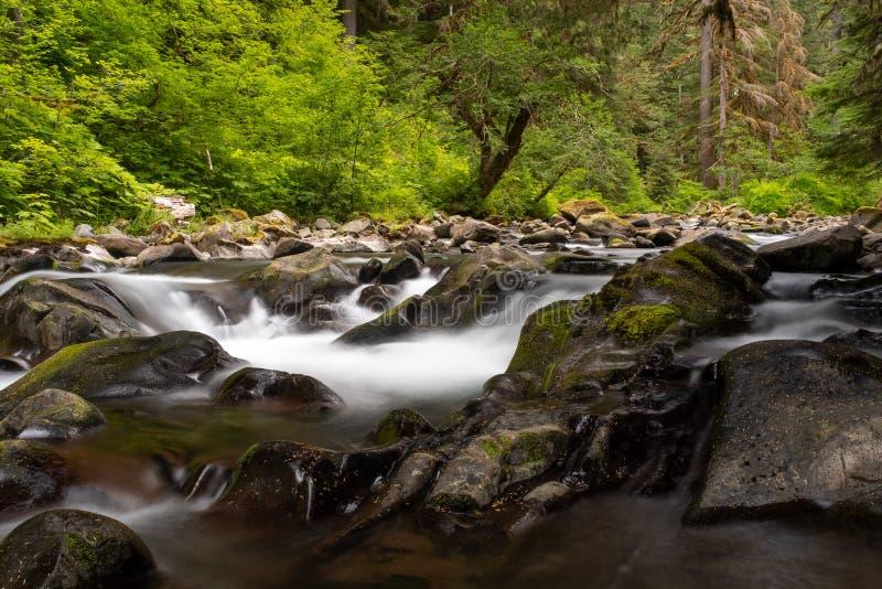 De Quillayute-Riviercascades over mos behandelden rotsen naar Sol Duc Falls in Olympisch Nationaal Park stock fotografie