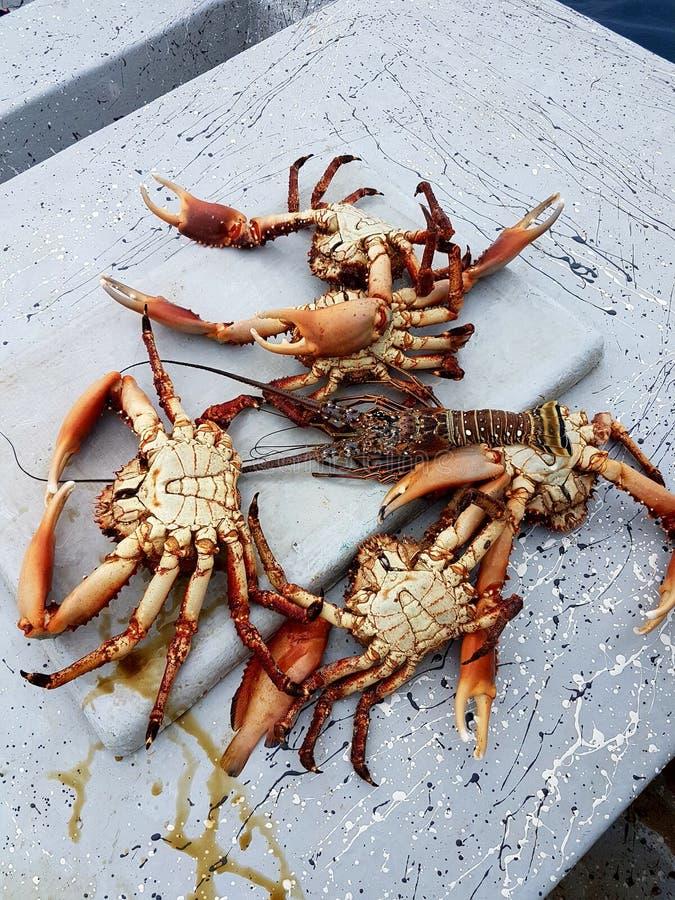 De röda krabborna royaltyfria bilder