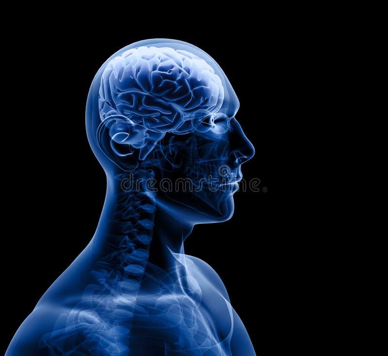 De röntgenstraal van de mens stock illustratie